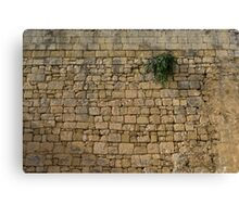 Life on Bare Rock - Up High on the Fortification Wall Canvas Print