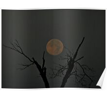 Full Moon Between The Limbs Poster