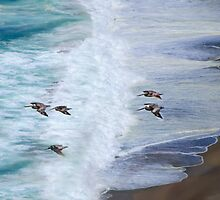 Gliding Over Beach by Diego Re
