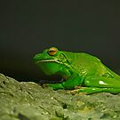 Giant Tree Frog by Sea-Change
