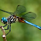 Dragonfly by Jane Brack