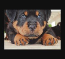 Cute Rottweiler Puppy With Blue Eyes Baby Tee