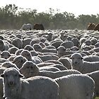Only Us Sheep Here by Saraswati-she