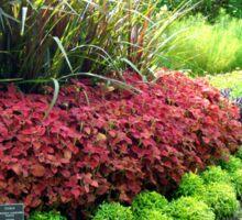 Lewis Ginter Botanical Gardens - Richmond     ^ Sticker