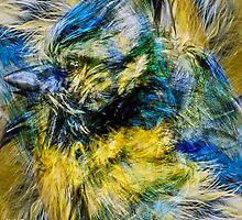 Designs Inspired By Nature: Blue Tit by Alec Owen-Evans