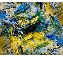 Designs Inspired By Nature: Blue Tit Photographic Print