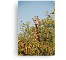 Giraffe making an appearance at Kruger Canvas Print