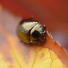 """"""" Bronze, Green & Gold """" (Rose Chafer) by Richard Couchman"""