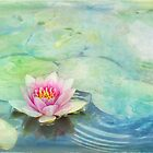 lily pond by Teresa Pople