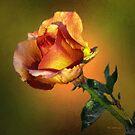 Tangerina by RC deWinter