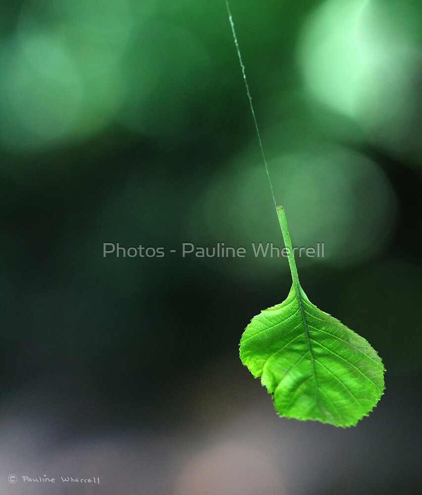 Hanging by a thread by Photos - Pauline Wherrell