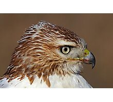Red-tailed Hawk Portrait Photographic Print