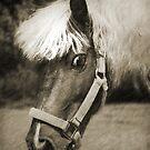 Pony by Ticker