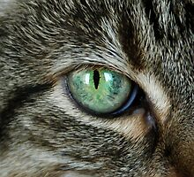 EYE OF THE KITTY by Gail Falcon