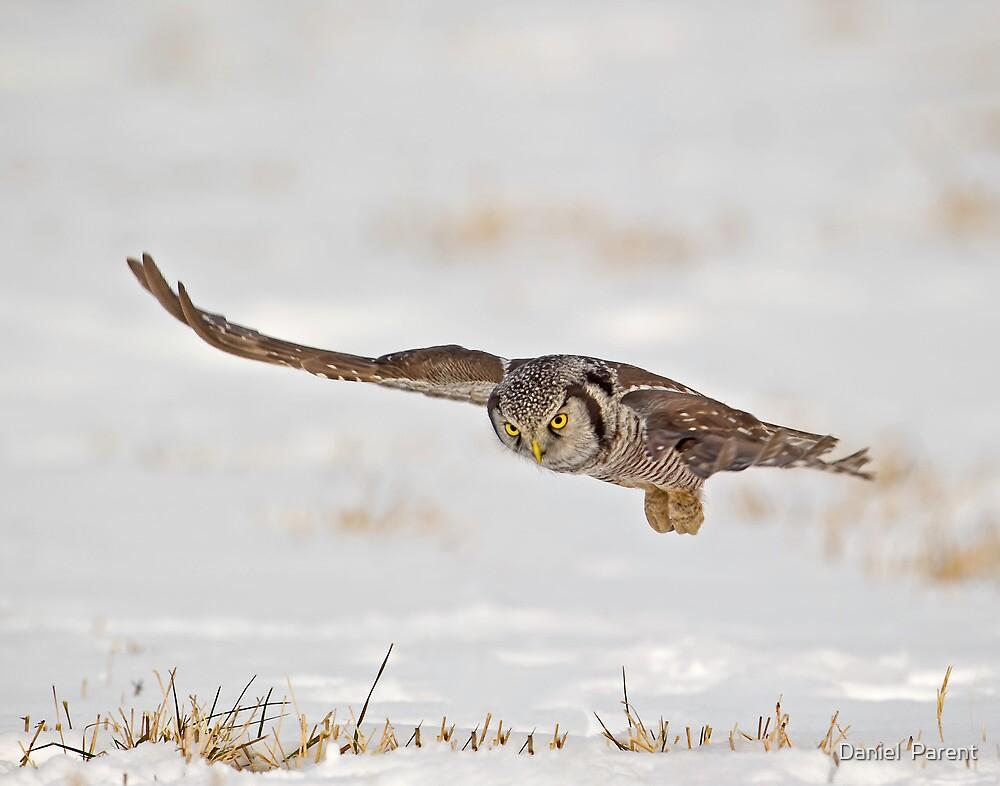 In Flight by Daniel  Parent