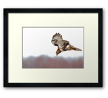 Supper Spotted - Red-tailed Hawk Framed Print