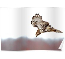 Supper Spotted - Red-tailed Hawk Poster