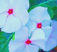 White Flowers  by Joy  Rector