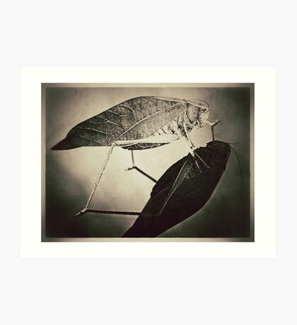 Insect (sepia) Art Print
