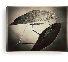 Insect (sepia) Canvas Print
