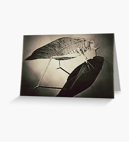 Insect (sepia) Greeting Card