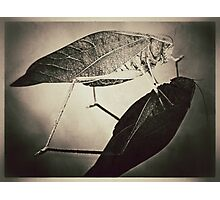 Insect (sepia) Photographic Print
