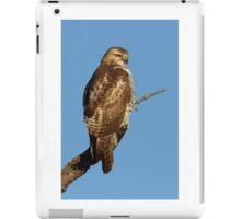Red-tailed Hawk - juvenile iPad Case/Skin