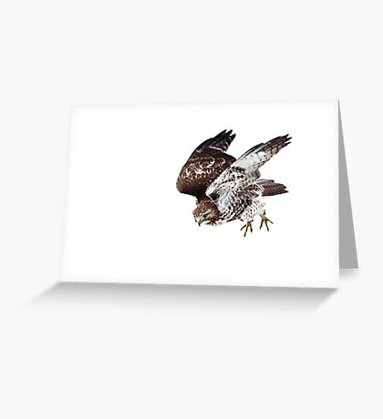 Red-tailed Hawk - Incoming Greeting Card