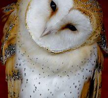 Barn Owl by Moonlake