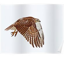 Red-tailed Hawk - Liftoff Poster