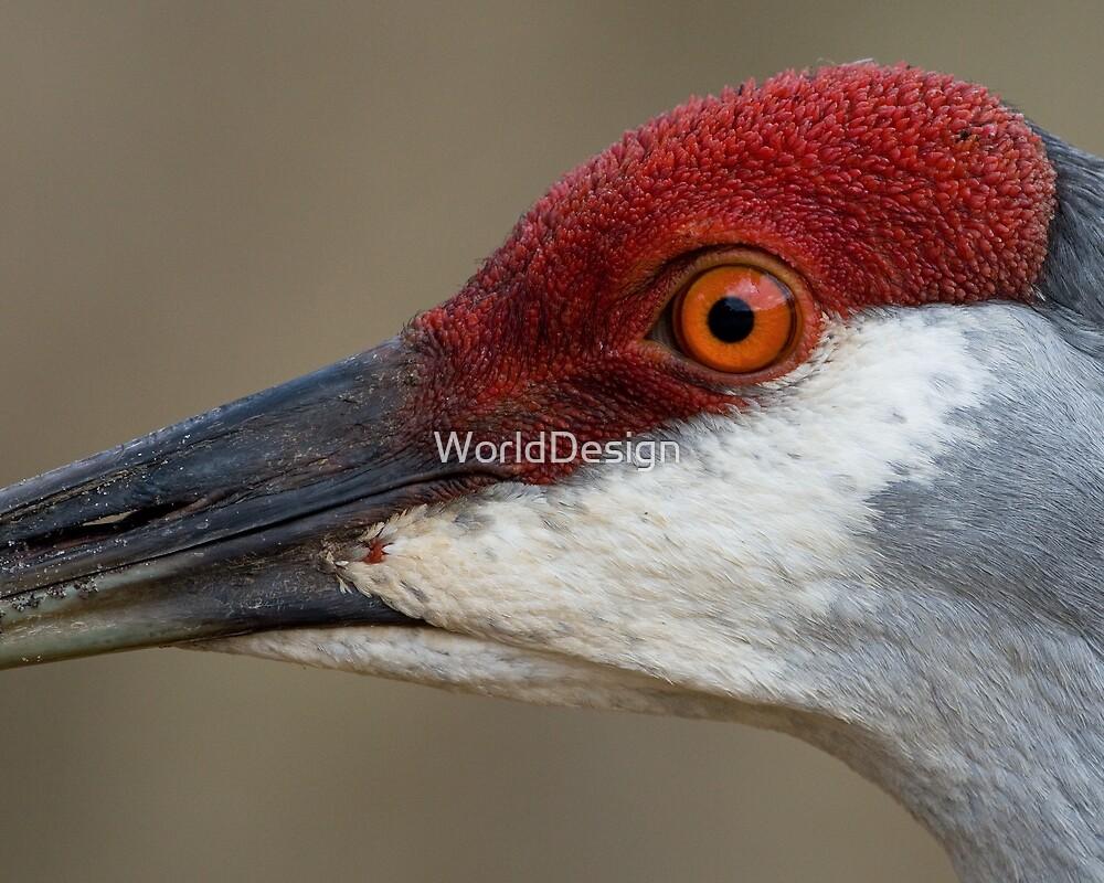 Red Cap by WorldDesign