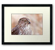 Cooper's hawk profile Framed Print