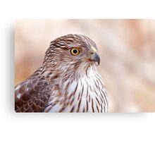 Cooper's hawk profile Metal Print