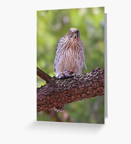 Mealtime - Coopers hawk Greeting Card