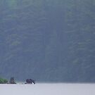 Early morning moose, Algonquin Park, Canada by Jim Cumming