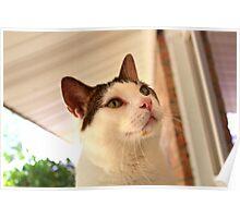 Max on the Windowsill Poster