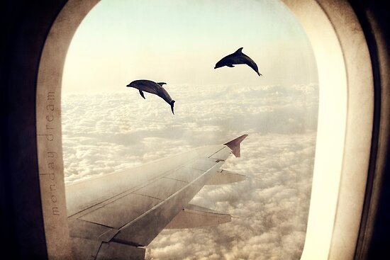 """Y Flying Dolphins """"Monday Dr..."""