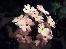Pretty little Flowers by FrankieCat