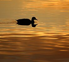 golden water perfect reflection by Jeannine de Wet