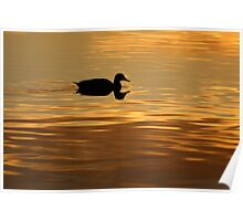 golden water perfect reflection Poster