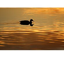 golden water perfect reflection Photographic Print