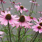Pink Flowers in Bloom by AuntieBarbie