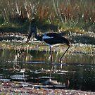 The Lone Stork 2 by byronbackyard