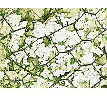 Cracked and twisted Photographic Print