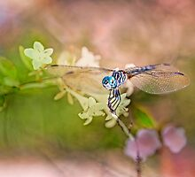 August Dragonfly by Bonnie T.  Barry