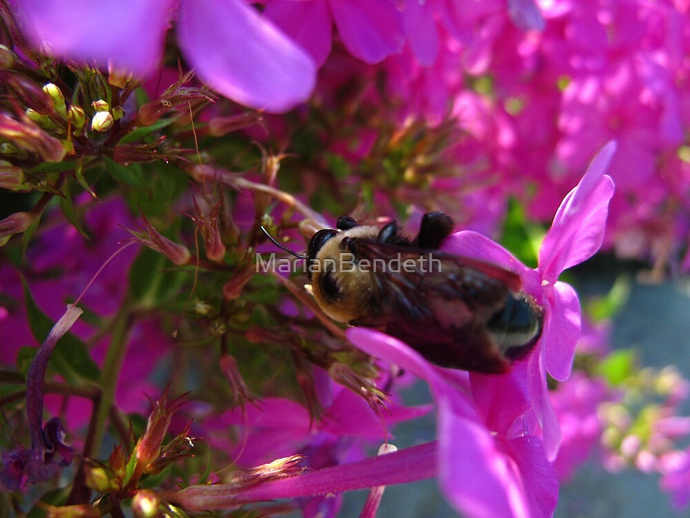 Bees and Bubblegum Pink by MarianBendeth