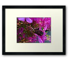 Bees and Bubblegum Pink Framed Print