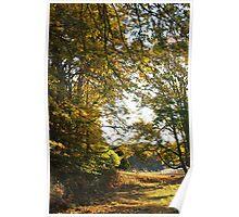 Fall Walk, San Juan Islands, Washington Poster