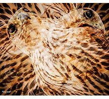 Designs Inspired By Nature: Falcon Photographic Print
