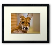 What you talkin about Willis ? Framed Print